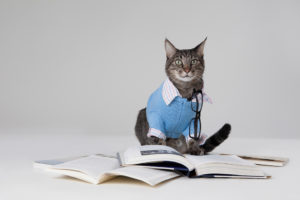 Cat wearing blue and white suit